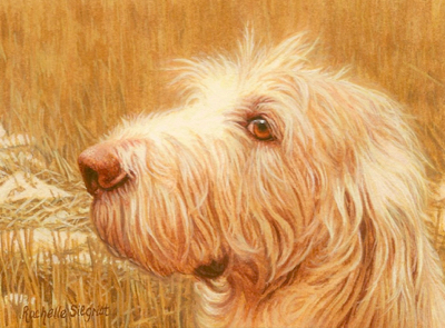 Commissioned Spinone Dog Painting by Rachelle Siegrist