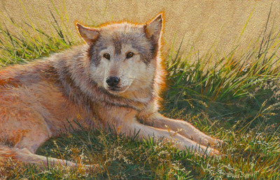 painting of a grey wolf by Wes Siegrist