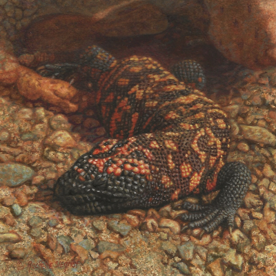 Fish and Reptile Paintings by Wes and Rachelle Siegrist