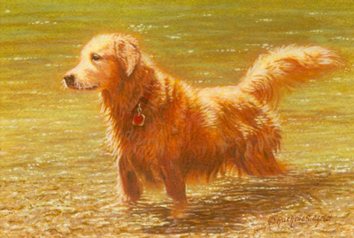 painting of a Golden Retriever by Rachelle Siegrist