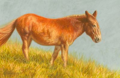 painting of a Mule by Rachelle Siegrist
