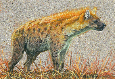 miniature painting of a Spotted Hyena by Wes Siegrist