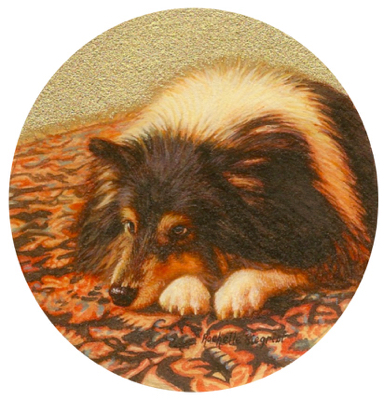 Commissioned miniature painting of a Sheltie dog by Rachelle Siegrist