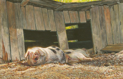 painting of a domestic pigs by Wes Siegrist