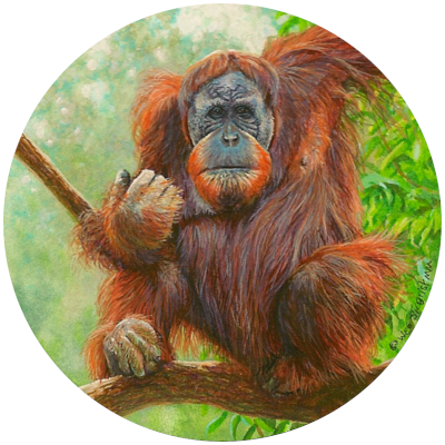 miniature painting of an orangutan by Wes Siegrist