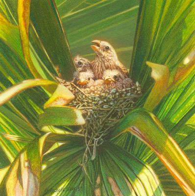 Miniature Painting of a house finches by Rachelle Siegrist
