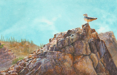 Miniature Painting of a California Gull by Wes Siegrist