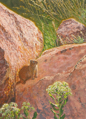 painting of a Wyoming Ground Squirrel by Wes Siegrist