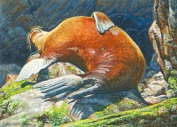 miniature painting of a sea lion