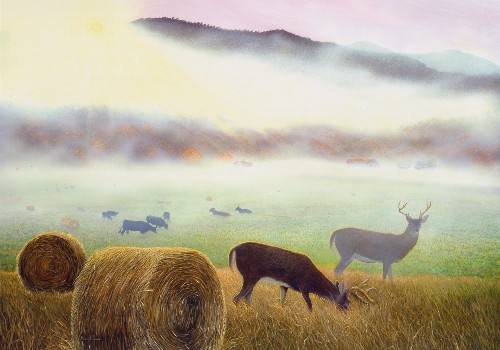 Fred Weiser S Wildlife Art Of Deer