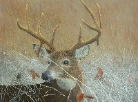 Frosty Morning - Buck Whitetail