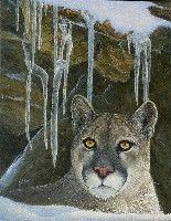 Icy Stare - Cougar