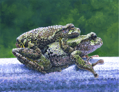 miniature painting of tree frogs by Wes Siegrist