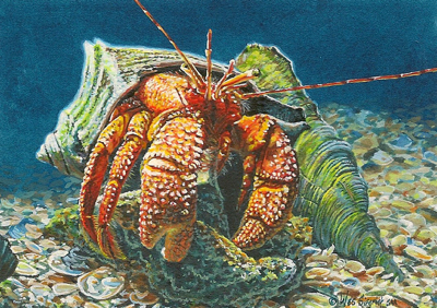 Miniature Painting of a Hermit Crab by Wes Siegrist