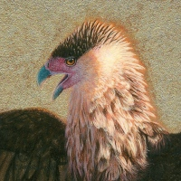 miniature painting of a crested caracara