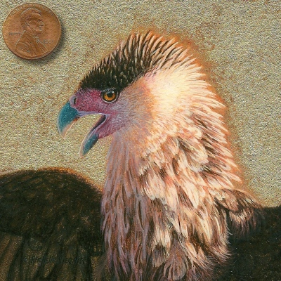 miniature painting of a crested caracara by Rachelle Siegrist