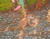 watercolor wildlife painting of a sonoran roundtable ground squirrel