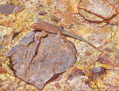 miniature painting of a Side-blotched Lizard by Wes Siegrist