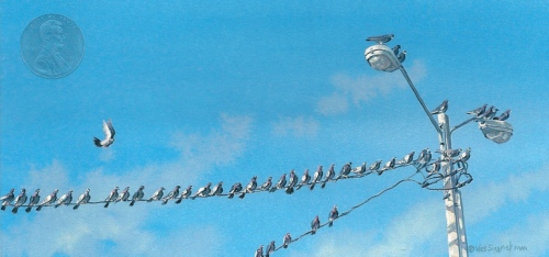 miniature painting of pigeons by Wes Siegrist